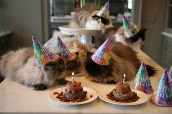 cats-celebrate-birtday-party