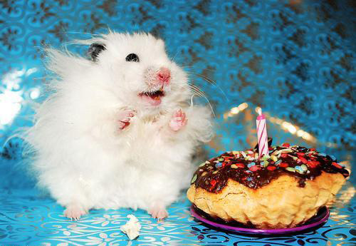 images of cats eating cake